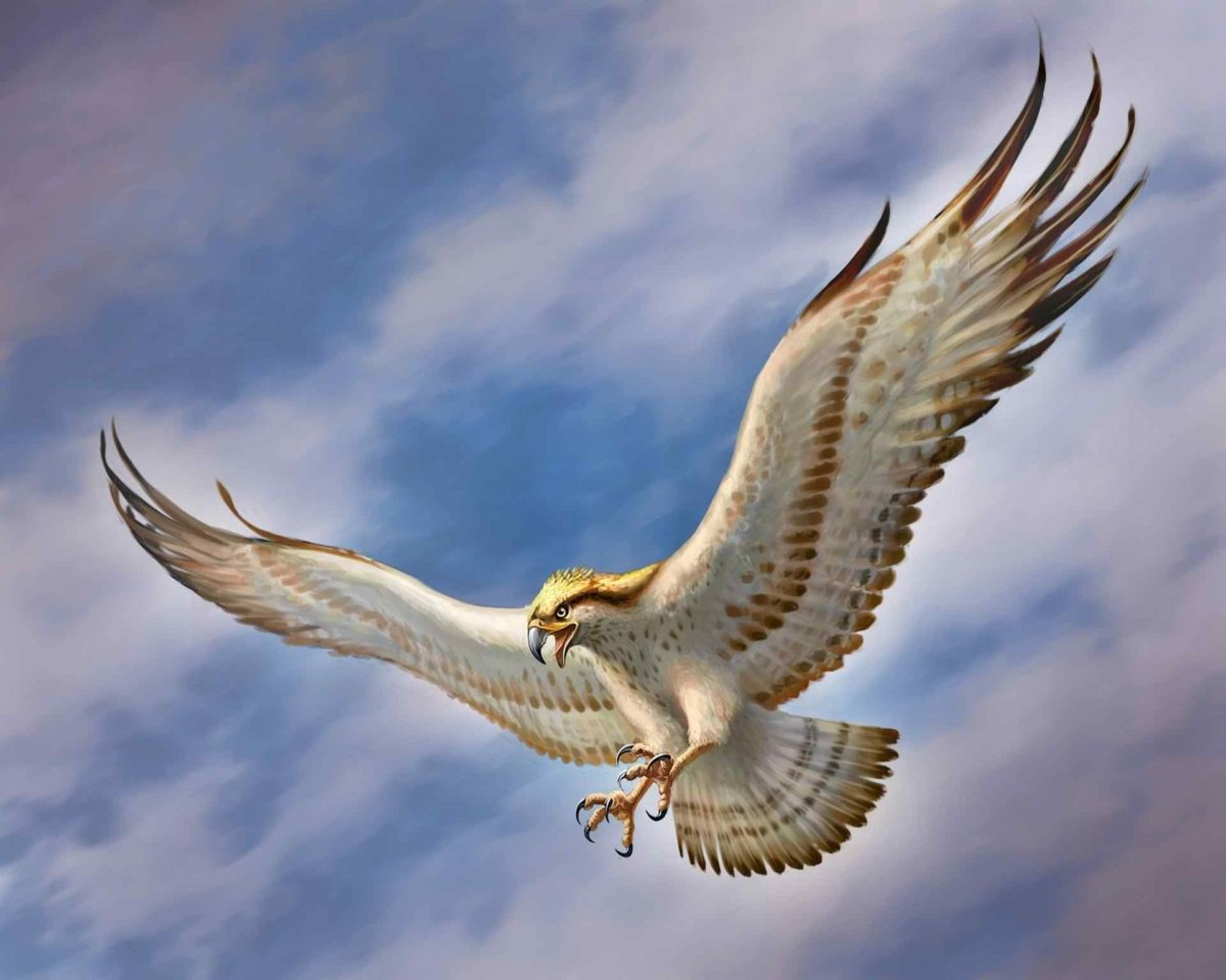 Flying Eagle HD Wallpapers – HD Wallpapers Pop