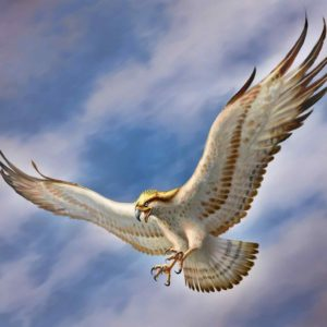 download Flying Eagle HD Wallpapers – HD Wallpapers Pop