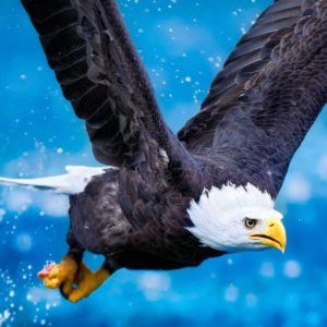 download Eagle Computer Wallpapers, Desktop Backgrounds | 1920×1200 | ID:331984