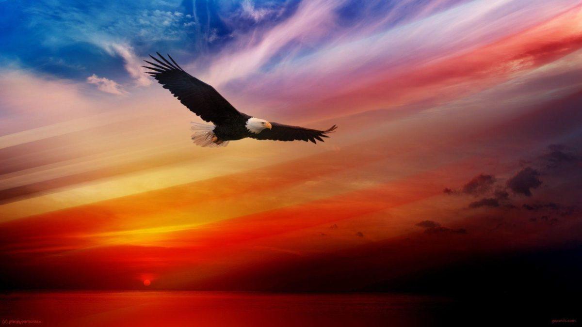 Bald Eagle Desktop Wallpaper – WallpaperSafari