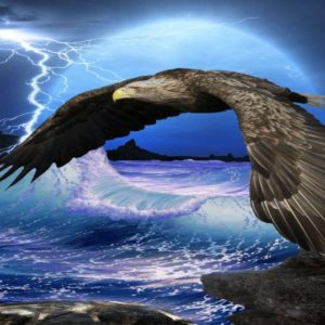 download Flying Eagle HD Wallpapers   Eagle Flying HD Pictures   HD …