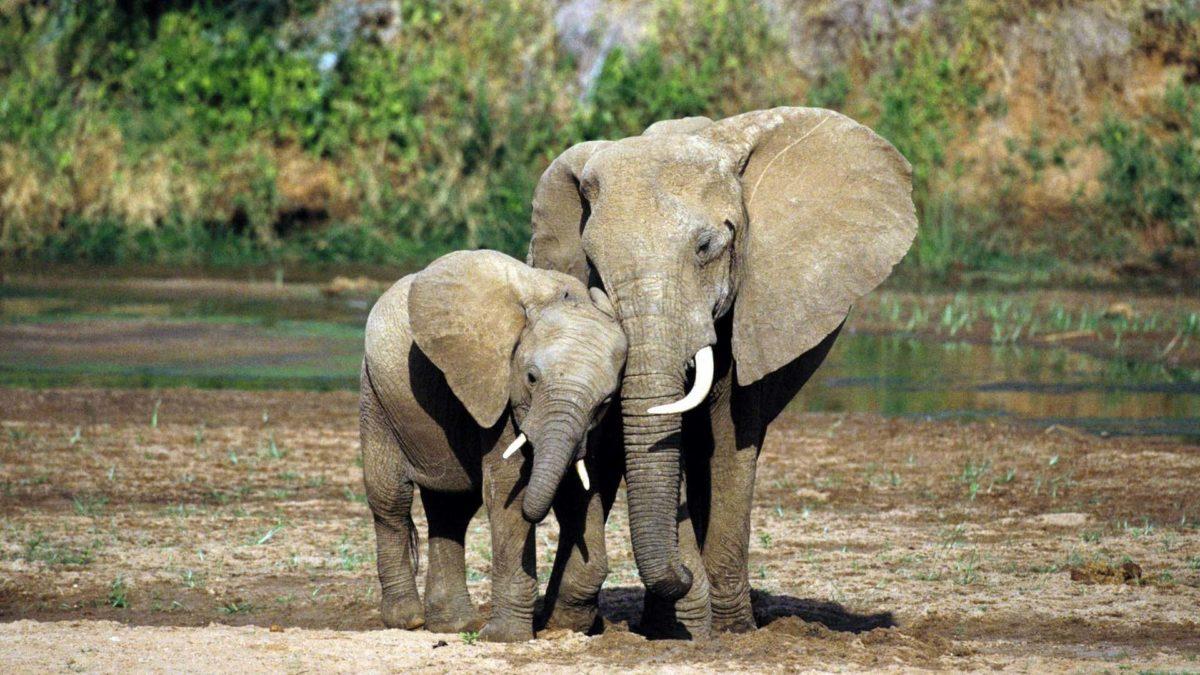 Elephant HD Wallpapers | Elephant Desktop Wallpapers | Cool Wallpapers