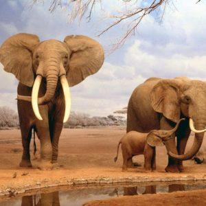 download Fonds d'écran Elephant : tous les wallpapers Elephant