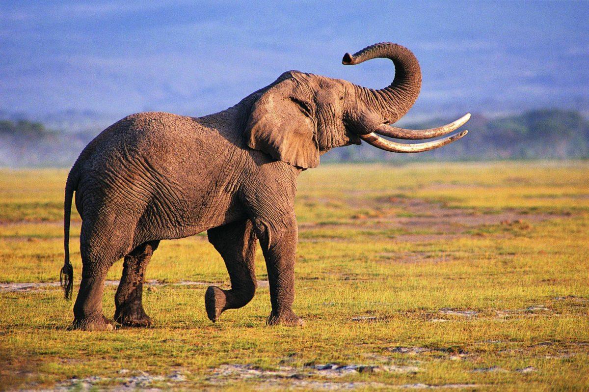 Elephant Desktop Wallpaper | Elephant Pictures | New Wallpapers