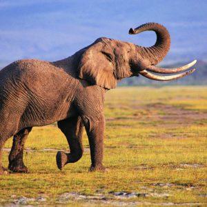 download Elephant Desktop Wallpaper | Elephant Pictures | New Wallpapers