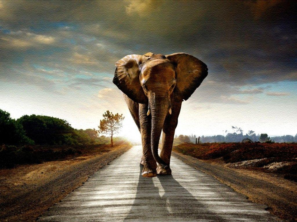 elephant_wallpapers_high_ …