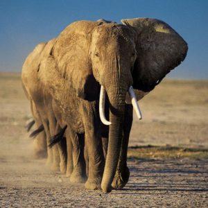 download Elephant Wallpaper – Animal Wallpapers (7109) ilikewalls.