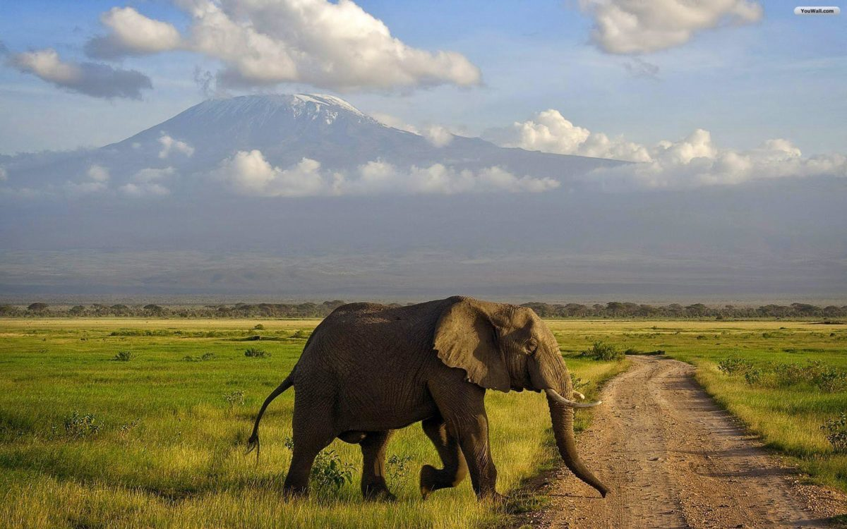 Elephant Wallpapers – Full HD wallpaper search – page 4