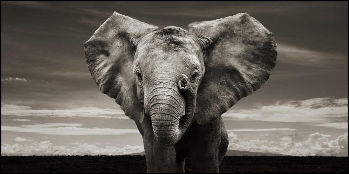 Elephant Computer Wallpapers, Desktop Backgrounds 1920×960 Id: 193044