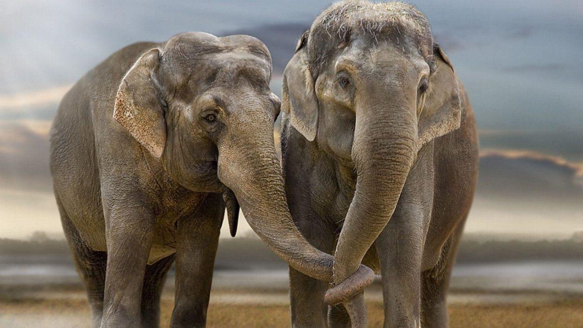 Cute Elephant desktop Wallpaper Pics free download | Lashwallpapers