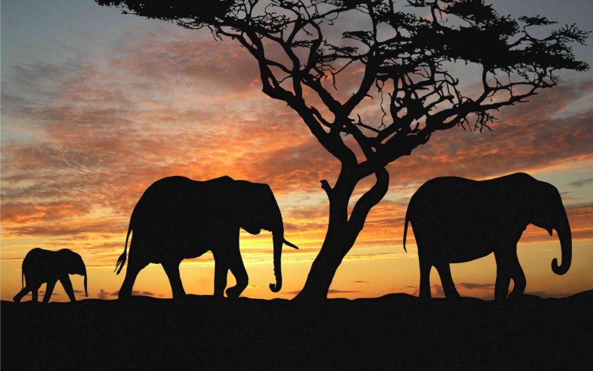 macbook elephant wallpaper – Wallpapers