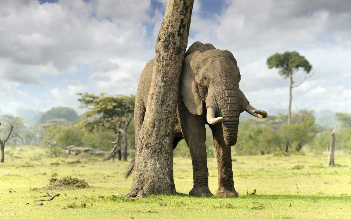 Elephant Computer Wallpapers, Desktop Backgrounds 2560×1600 Id: 351429