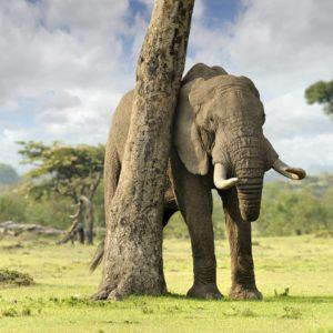 download Elephant Computer Wallpapers, Desktop Backgrounds 2560×1600 Id: 351429