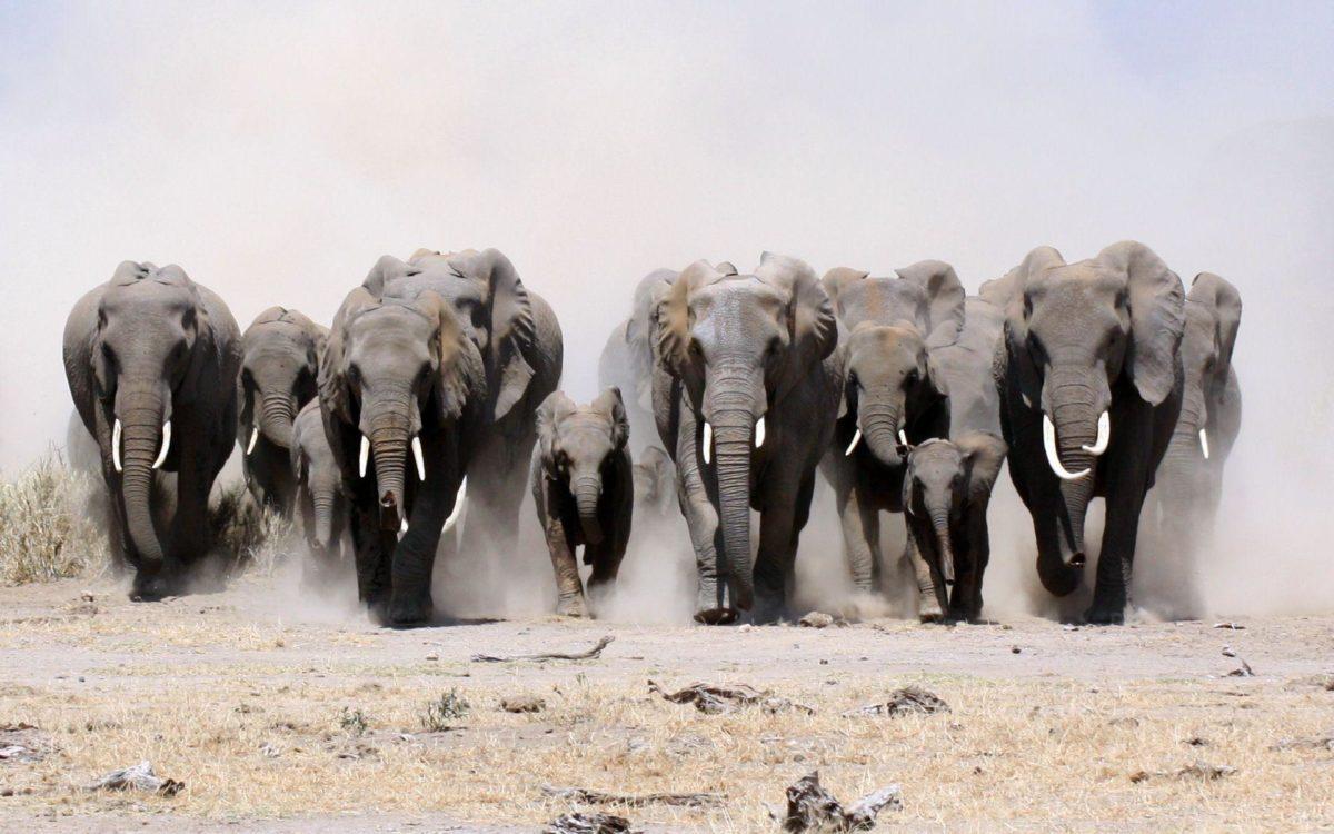 305 Elephant Wallpapers | Elephant Backgrounds