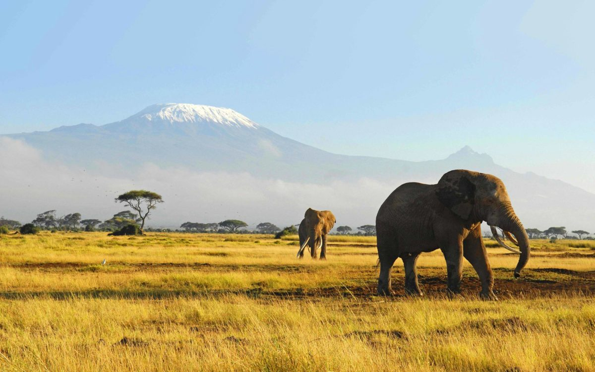 Elephant Wallpapers – Full HD wallpaper search – page 2
