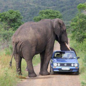 download Elephant Wallpaper – Animal Wallpapers (7101) ilikewalls.
