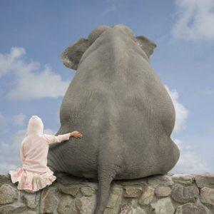 download Elephant full hd wallpaper
