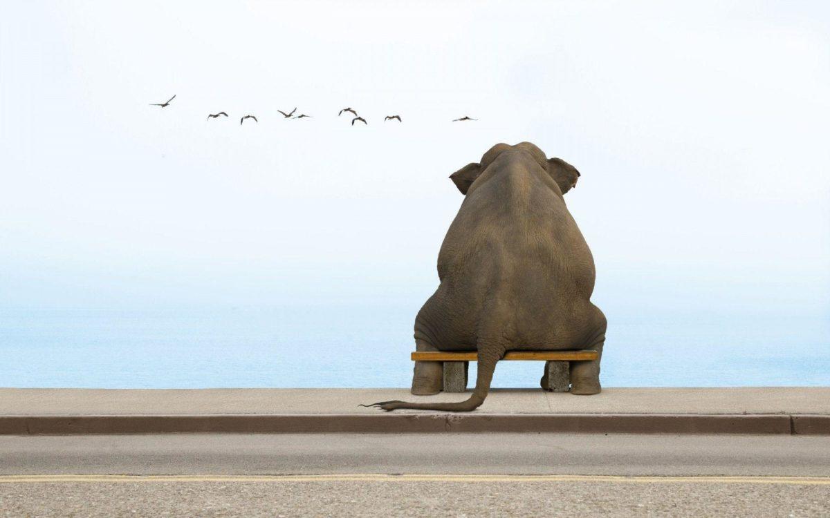 1920×1200 Sitting Elephant Wallpaper