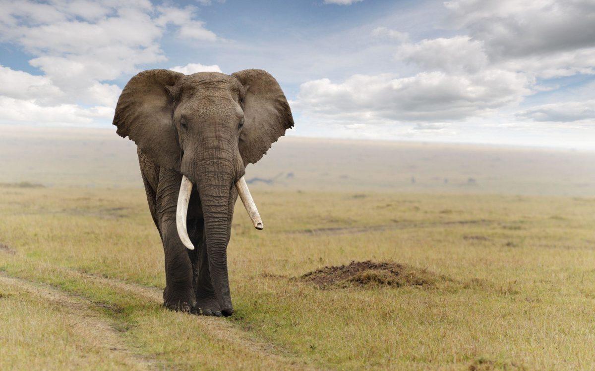 Fonds d'écran Elephant : tous les wallpapers Elephant