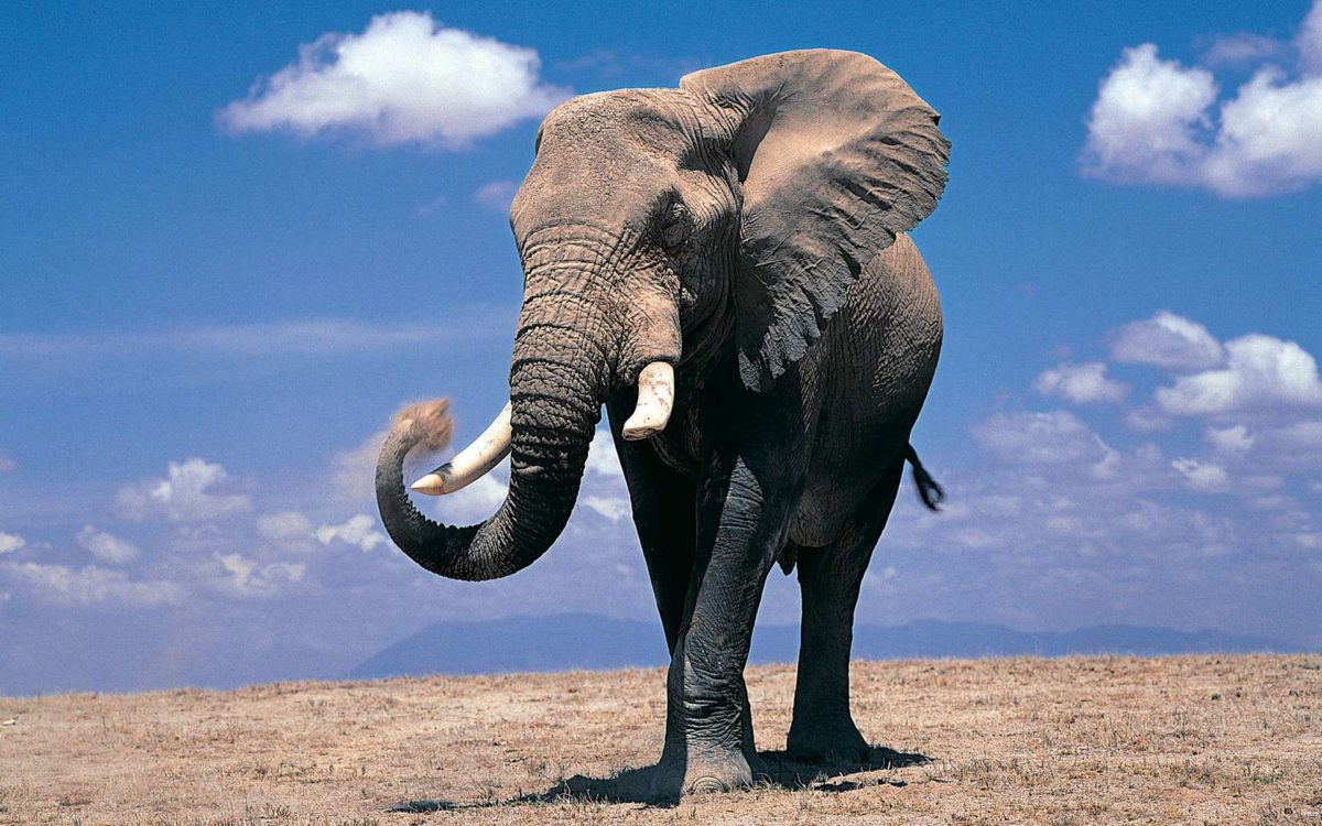 Cute Elephant Wallpapers HD #10947 Wallpaper | Cool Walldiskpaper.com