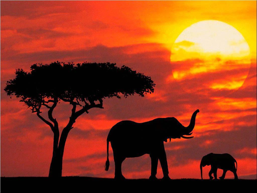 Elephant-Wallpapers-4.jpg