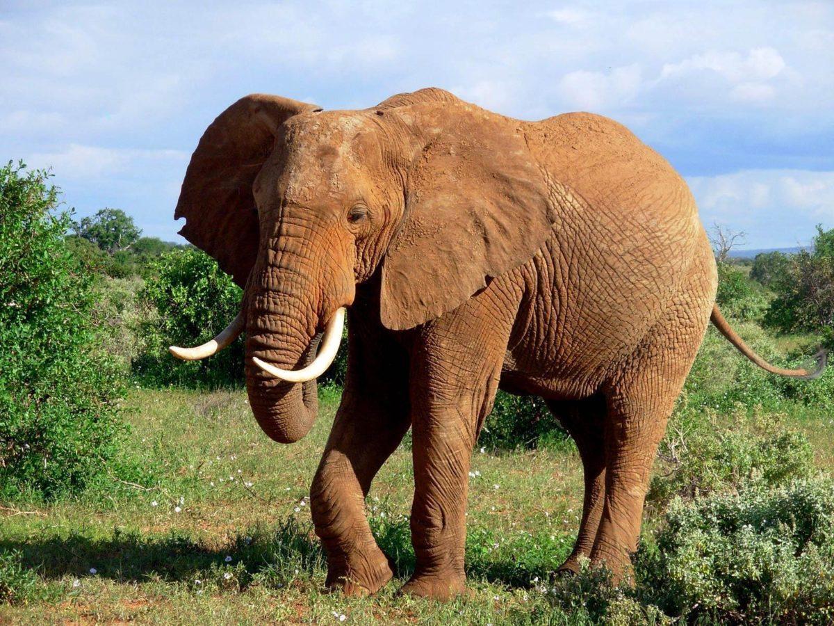 Elephant Wallpaper on Pinterest