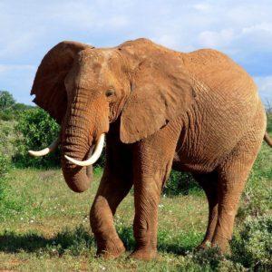 download Elephant Wallpaper on Pinterest