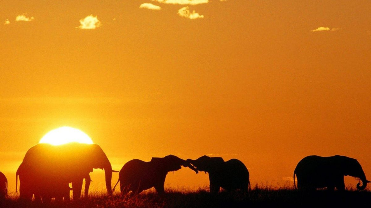 elephant wallpapers | elephant wallpapers – Part 3