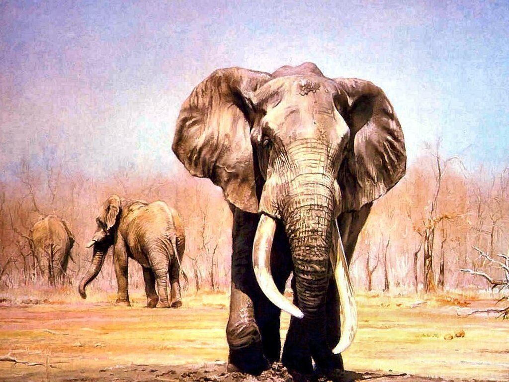 Wallpapers For > Painted Indian Elephant Wallpaper