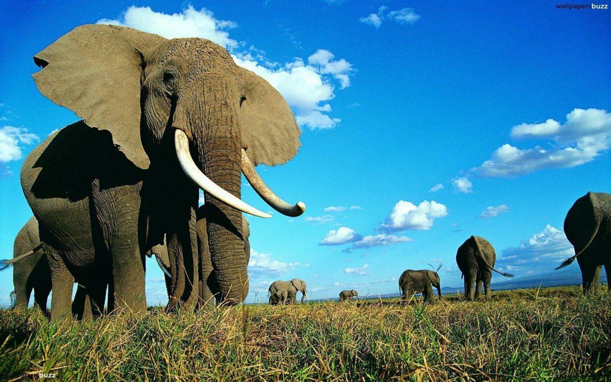 Elephant Wallapaper hd (7) – Wallpapers Online | Amazing …