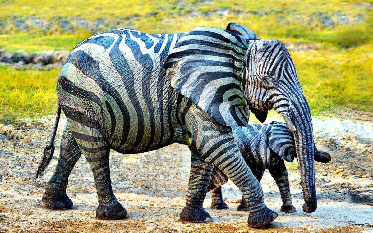 317 Elephant Wallpapers | Elephant Backgrounds