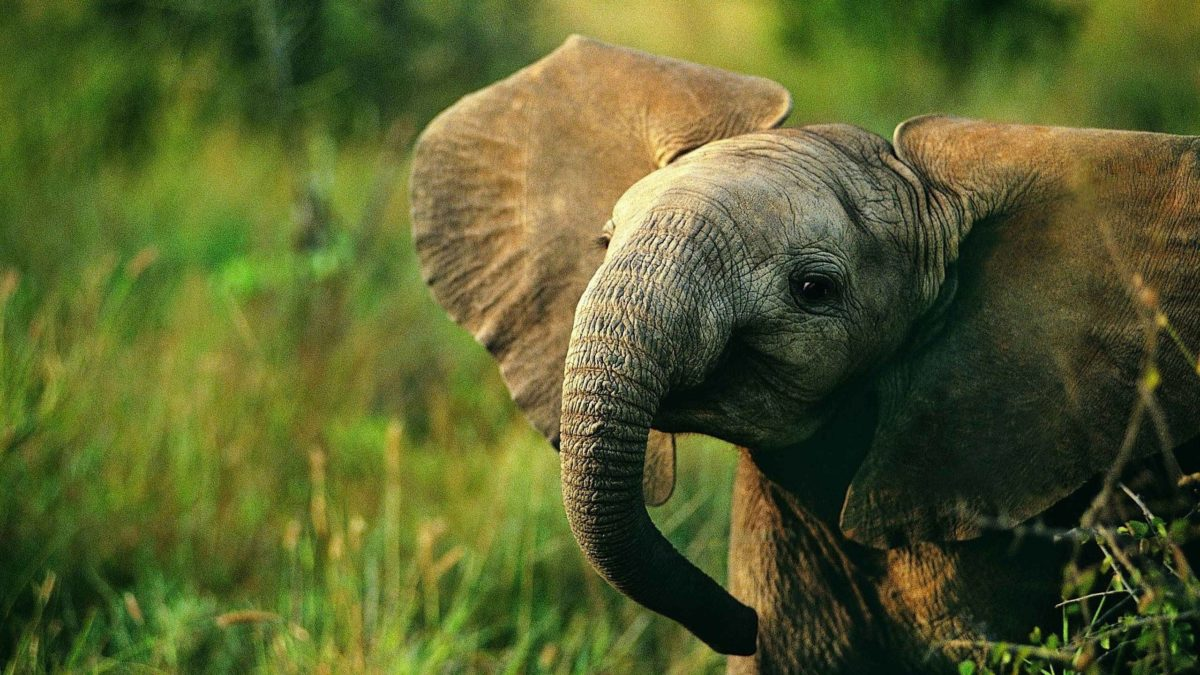 Animals For > Colorful Elephant Wallpapers