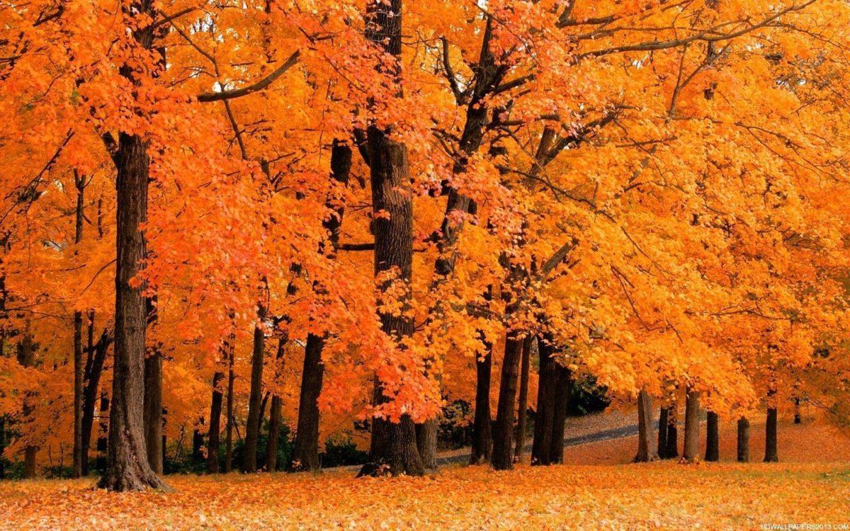 Fall Wallpapers Desktop wallpaper – 1011359