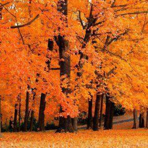 download Fall Wallpapers Desktop wallpaper – 1011359