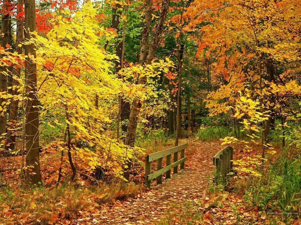 Beautiful Fall Wallpapers – Autumn Wallpaper (15496213) – Fanpop