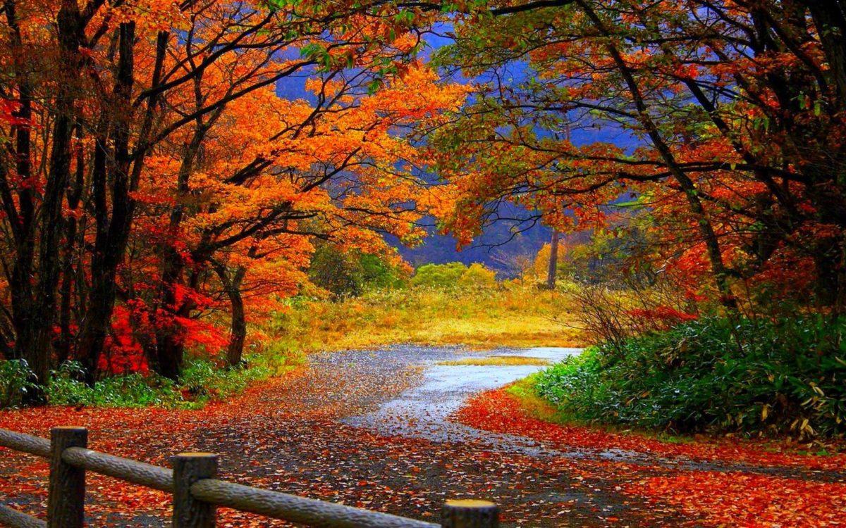 Fall Wallpapers HD | Bulk HD Wallpapers