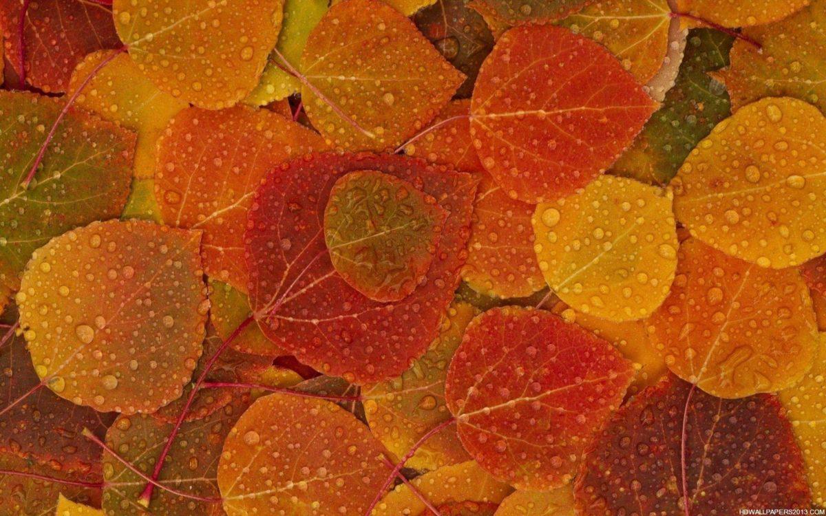 Fall | wallpaper, hd wallpaper, background desktop
