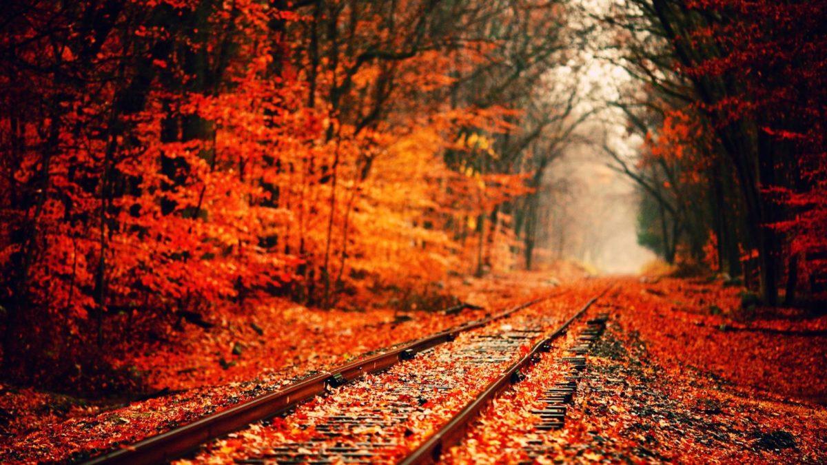 Fall HD Wallpapers 1080p – HD Wallpapers Inn