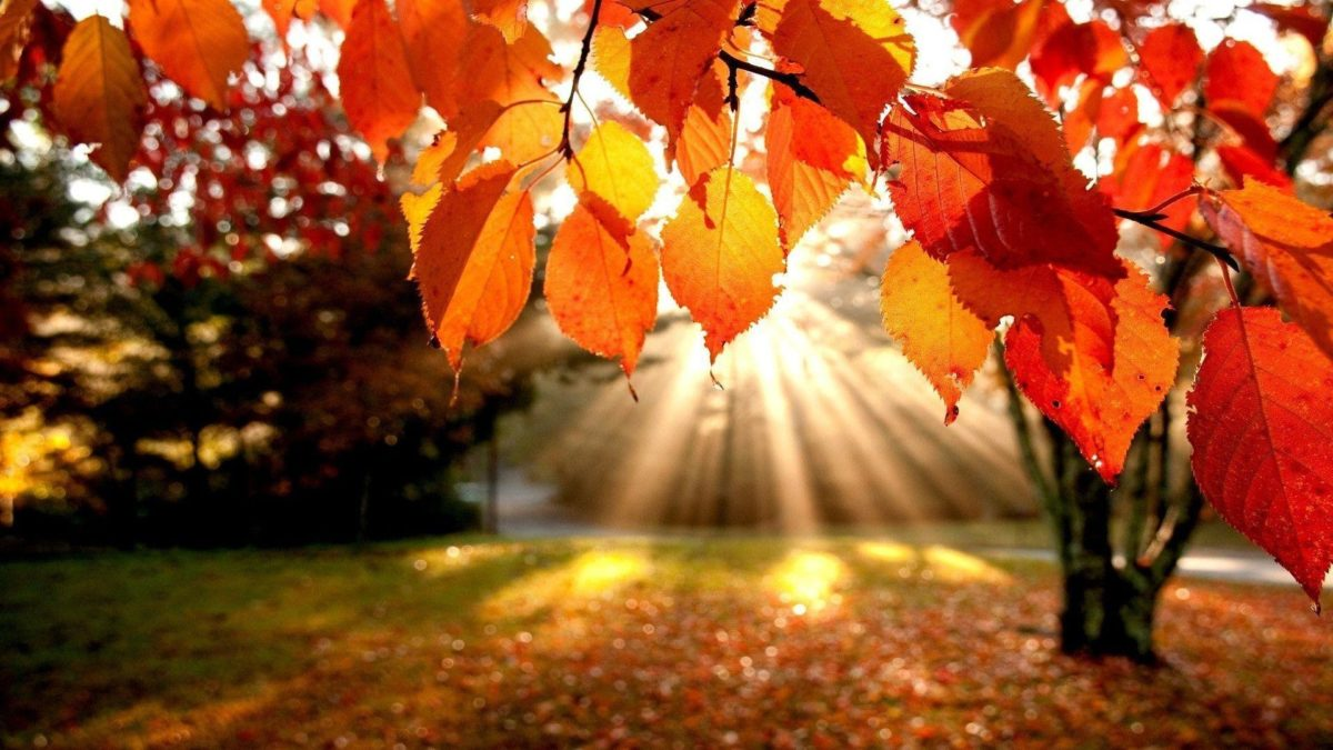 Anime Fall Wallpaper Pictures 5 HD Wallpapers | aduphoto.