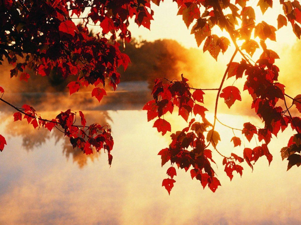 Light Beam Autumn Fall Wallpaper | HD Wallpapers & HD Backgrounds …
