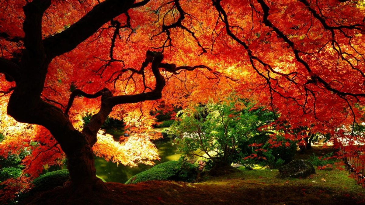 Autumn Wallpapers | Inspire Kids