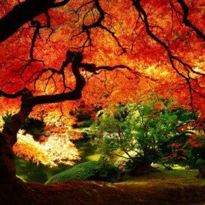 download Autumn Wallpapers   Inspire Kids