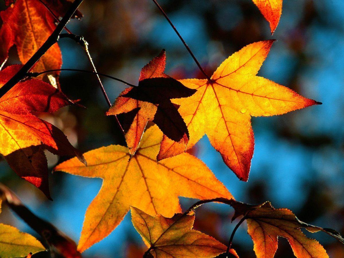 Fall HD Wallpapers – HD Wallpapers Inn