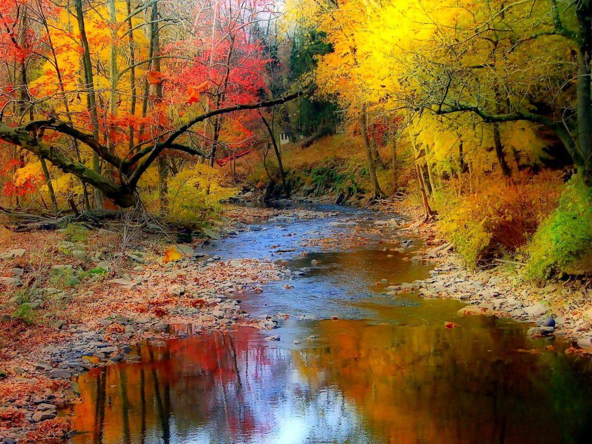 Fall Wallpaper 11202 1600×1200 px ~ FreeWallSource.
