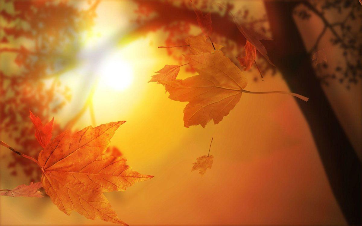Stunning Fall Wallpapers – HD Wallpapers Inn