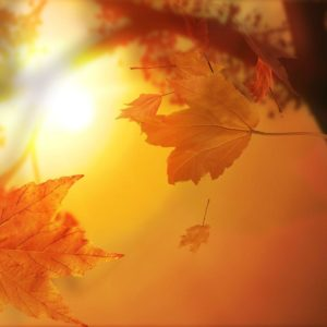 download Stunning Fall Wallpapers – HD Wallpapers Inn