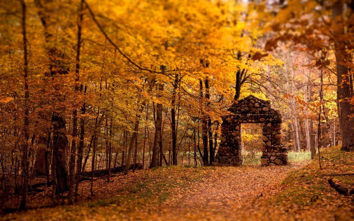 Fall HD Wallpaper › Findorget.com