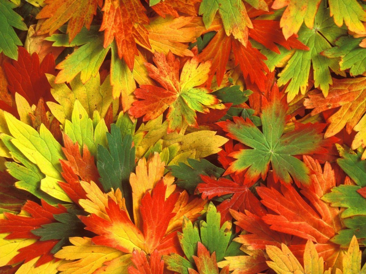 Fall Leaf Wallpaper 3D Colors Of Fall Wallpapers HD Wallpapers …