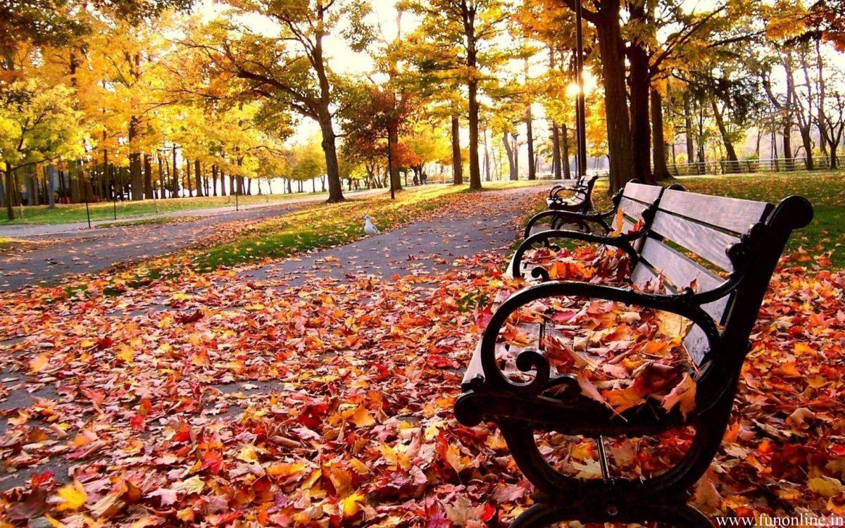 Fall Season Wallpapers – Full HD wallpaper search