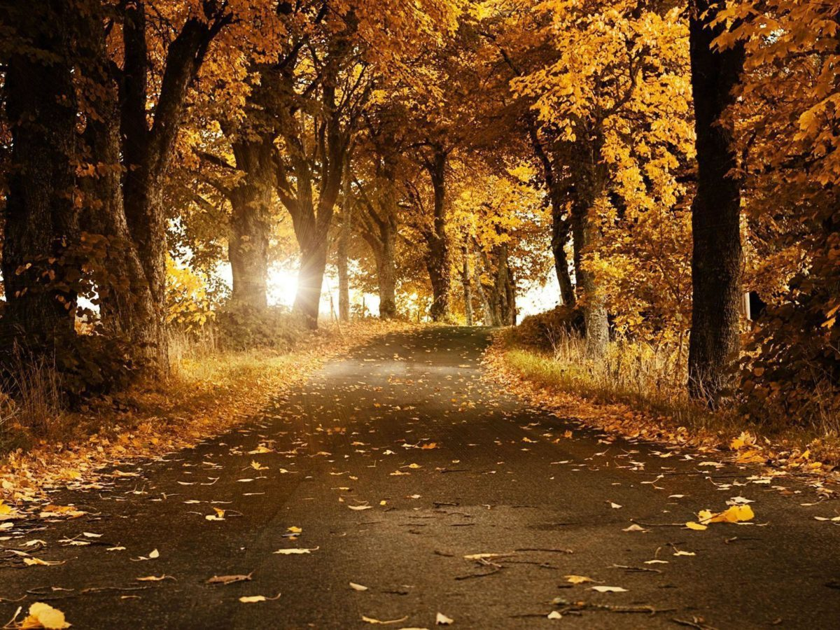 Fall Desktop Wallpapers and Backgrounds › Findorget.com